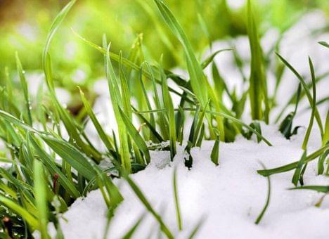 Шкідники озимих зернових культур та планування захисних заходів