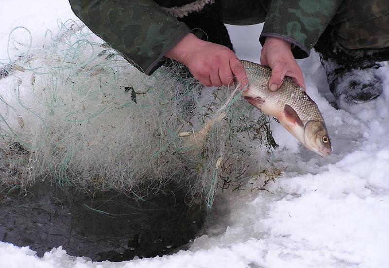 рыбалка на миассе новости