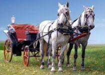 Соревнования конных упряжек без смс