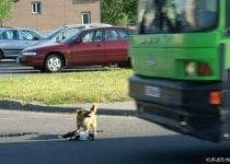Дворняжка стояла на проезжей части, чтобы машины еще раз не проехали по его другу. Фото: Александр Южный, kurjer.info