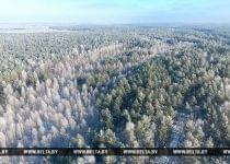 Зима в Налибокской пуще. Фото БелТА